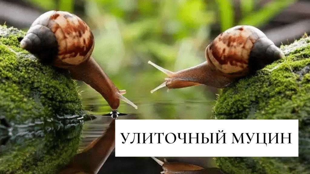 улиточный муцин