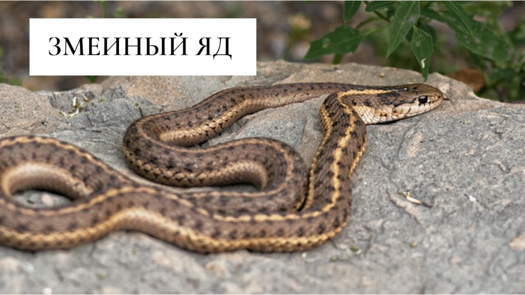 змеиный яд