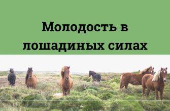 krem s konskim jirom